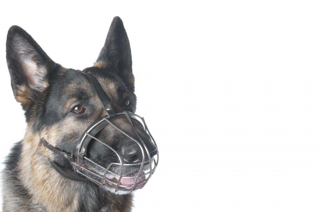 dog-in-dog-muzzle
